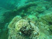 Manzanillo diving