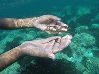 Meet Manzanillo diving