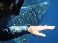 Disfrutando del nado con tiburón en el caribe