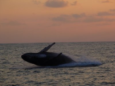 Paseo de avistamiento de ballenas para niños
