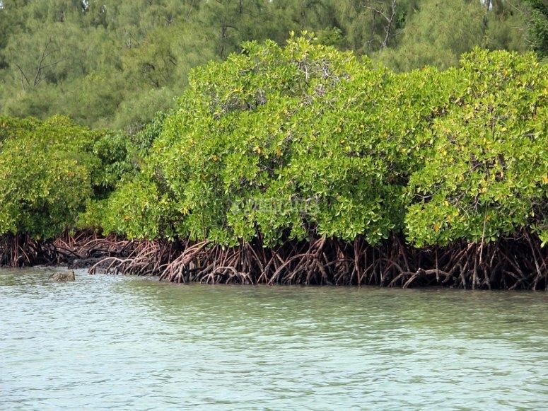 Recorrido por los manglares