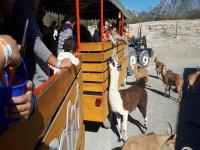 Safari train in Monterrey