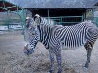 Zebra inside the facilities