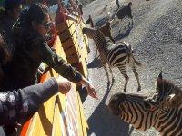 Zoo Safari in Monterrey