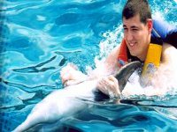 Adventure with dolphins