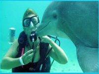 Diving with aquatic mammals