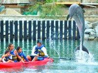 Kayaks familiares