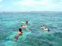 Looking for reefs