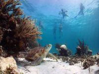 snorkeling and marine life