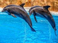 Interactua con los delfines en Costa Maya