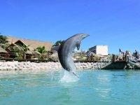 Nuestros bellos delfines de Costa Maya