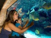 Aquarium Xcaret