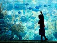 Watching fish in the Xcaret Aquarium