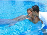 Enjoying with the dolphin
