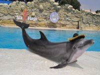 Mexican dolphin