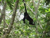 Fauna en la selva