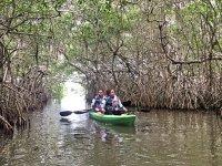 Conociendo los manglares