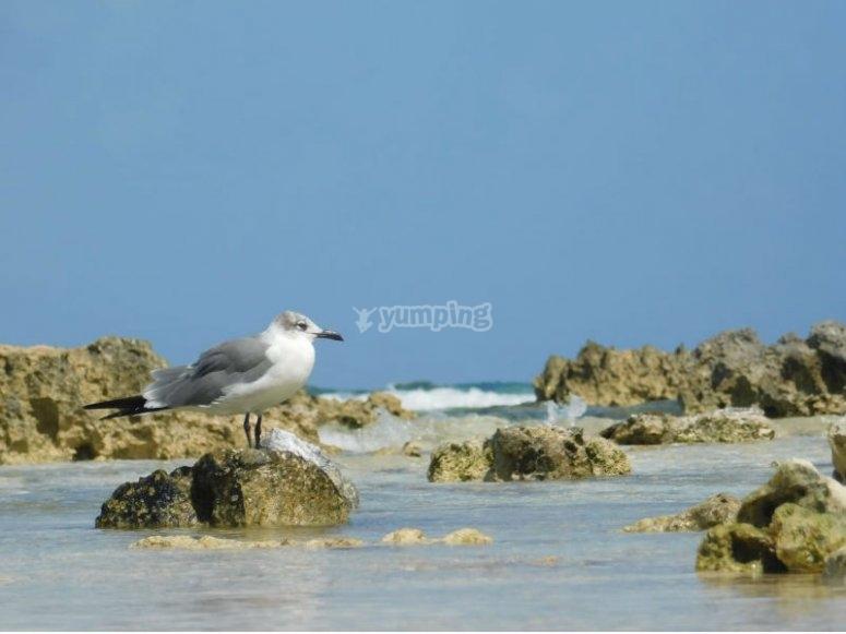 Descubre la flora y fauna de Isla Mujeres