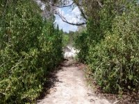 Paths to nature