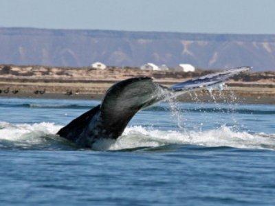 Carpe Via Whale Watching