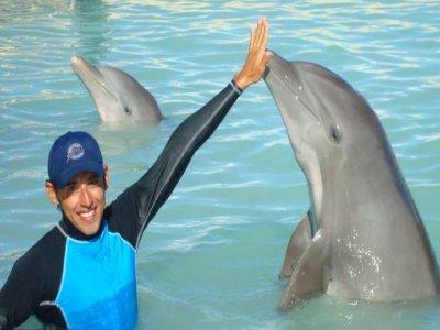 Six Flags México Nado con Delfines