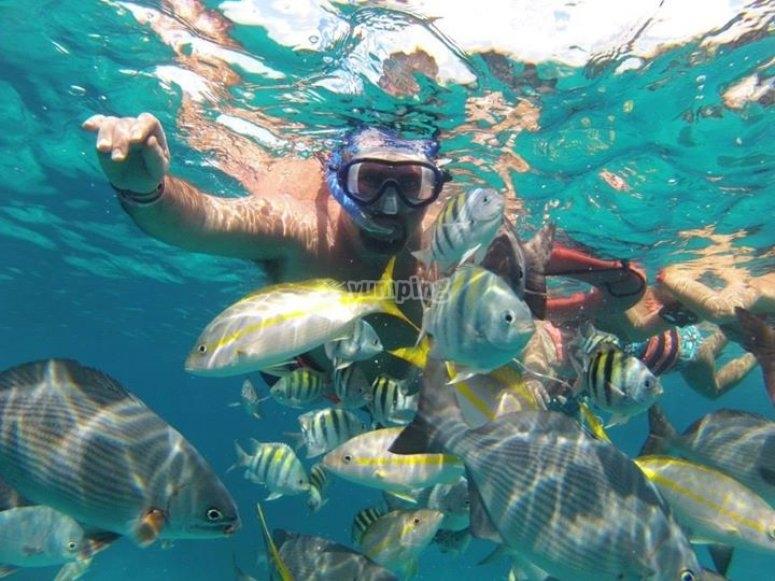 snorkel en arrecifes