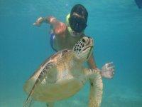 Snorkel with sea turtles in Akumal