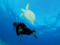 Cancun reef