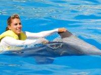 Enjoy the dolphins