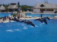 tb Dolphin training