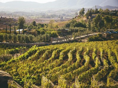 Ansell Wine Tours