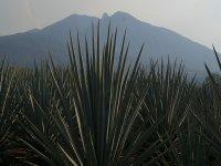 Excursión privada de caminata al Cerro de Tequila