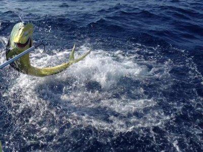 Manati Divers Pesca