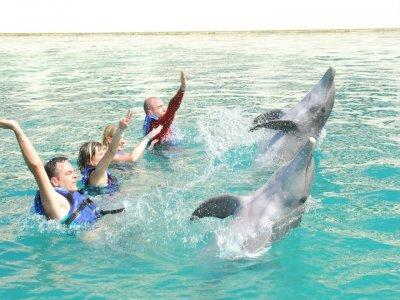 Solatino Nado con Delfines