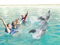 Entrenadores de delfines