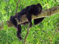 Amigos de la selva