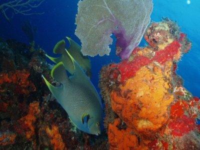 Marina Punta Este Snorkel