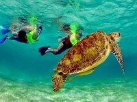 Snorkel con tortugas en la Riviera Maya