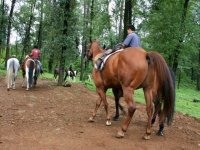 Horseback riding in Valle