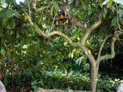 Tour del Cacao 2 días Palenque y San Cristóbal
