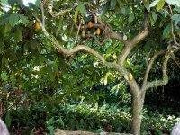 Cacao tour: 2 days in Palenque & San Cristóbal