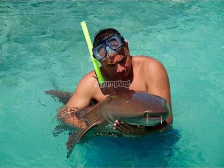 Tiburon gata