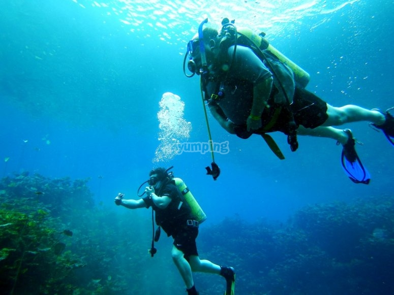 Scuba diving together