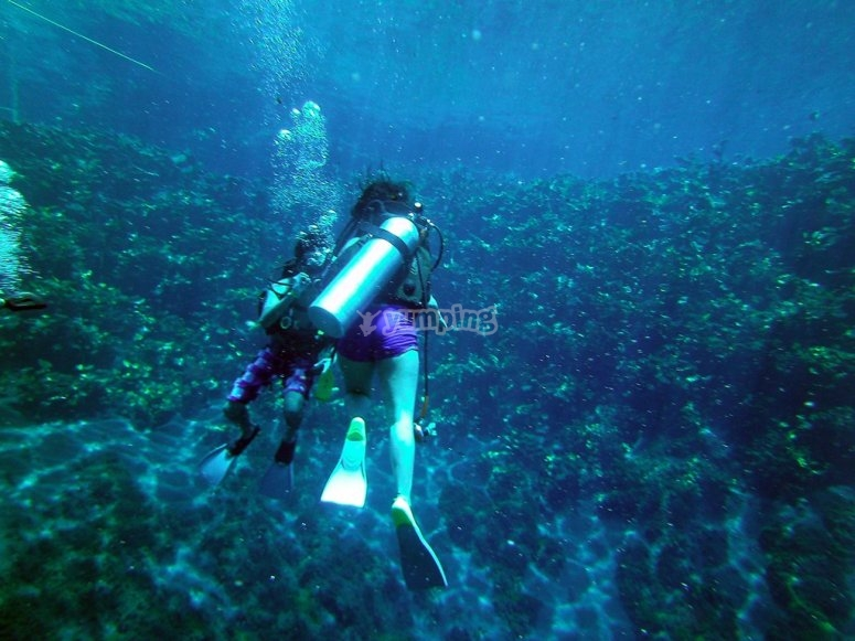 Dive with professionals