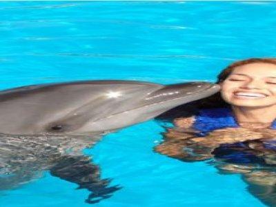 Coral Beach Marina Nado con Delfines