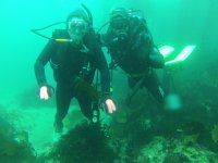 Dive in Arbolitos Cove and discover the seabed