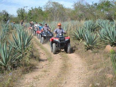 Quad route + Tequila fabric