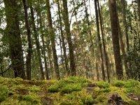Bosque San Miguel Regla