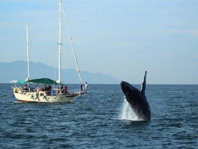 Avistamiento de ballenas 4hs en Vallarta