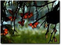 Recorrido con mariposa monarca